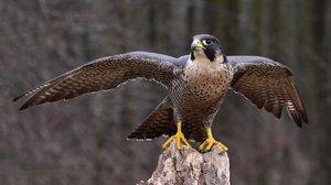 Самые большие и быстрые птицы