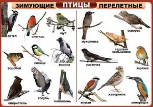 Какие есть птицы на земле