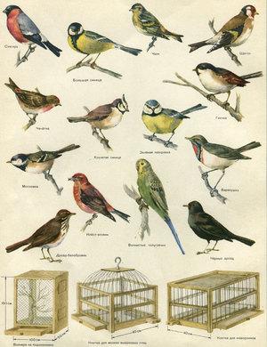 Птицы, которые не летают