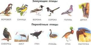 Самые распространенные птицы