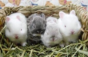 Советы по отсаживанию крольчат