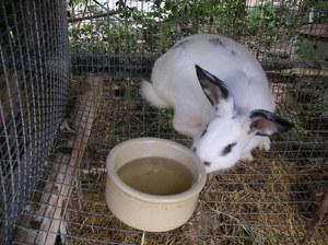 Комбикорма для кроликов-Как приготовить
