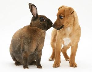 Кролик Рекс и щенок - друзья