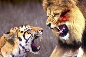 Кто сильней из животных