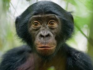 Внешний вид обезьяны