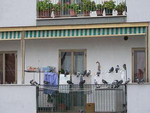 Как защитить крышу балкона от голубей