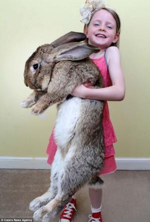 Порода кролика