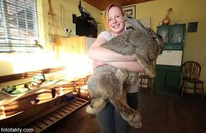 Какие породы кроликов лучше для разведения