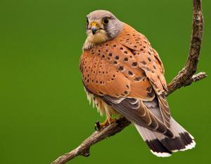 Поведение птицы в природе