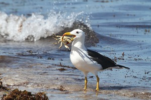 Птица альбатрос-места обитания