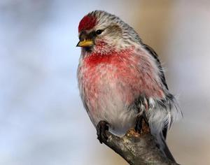 Маленькая птичка