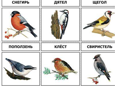 Птицы проживающие в средней полосе России