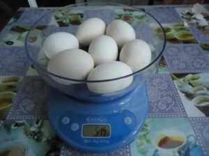 Норма яйценоскости для пушкинских кур - 250 яиц в год