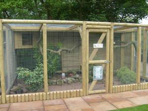 Разведение фазанов в доме