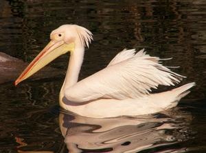 Редкие и исчезающие виды птиц