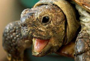 Черепахи - особенности породы