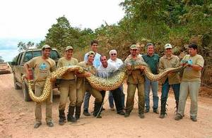 Самые большие змеи в мире
