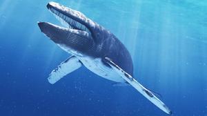 Синий кит самое большое животное