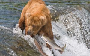 Где обитают бурые медведи