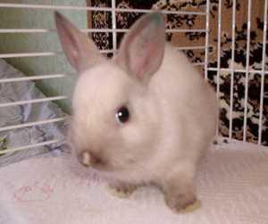 Кролики в домашных условиях
