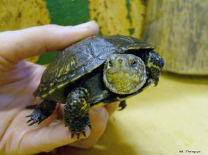 Внешний вид черепах