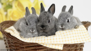 Заболевания кроликов
