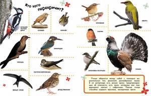 Какие птицы не улетают в теплые края