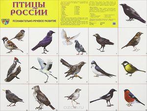 Птицы на территории Росии