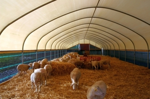Строительство овчарни для овец своими руками