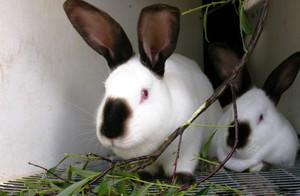 Кролики из питомника