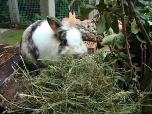 Зеленая трава для кролика
