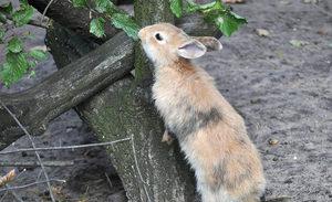 Что можно давать кроликам в пищу