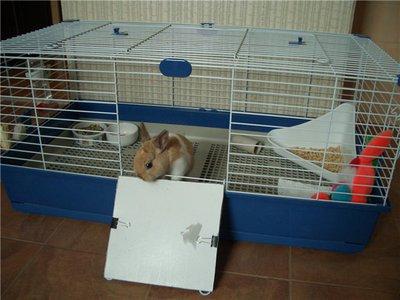 Условия для декоративных кроликов в доме: как кормить