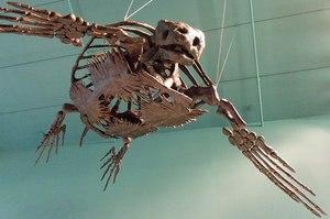 Скелет черепахи - особенности