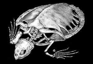Снимок скелета черепахи