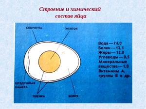Состав яйца