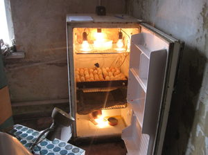 Способ сборки инкубатора