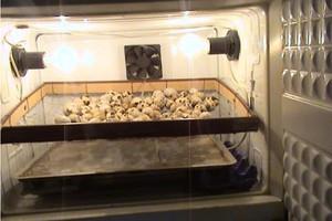 Как сделать инкубатор из холодильника