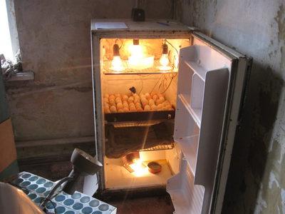 Как изготовить инкубатор из холодильника своими руками