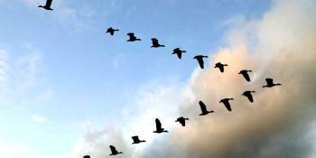 Почему птицы улетают на юг?