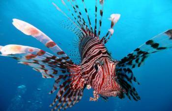 Самые ядовитые рыбы
