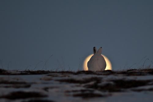 Охота зимой из засидки