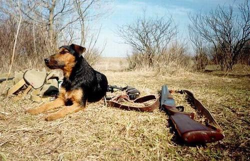 Открытие весенней охоты в Тамбовской области в 2019 году