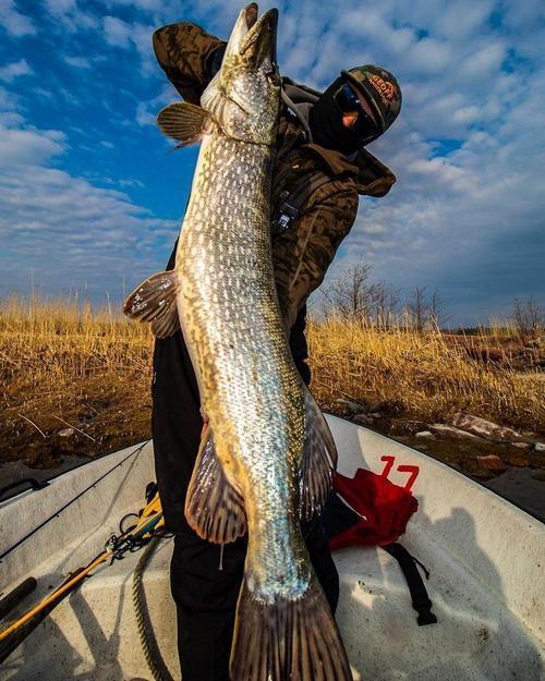 Рыбу каких размеров разрешено брать